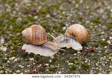 Dos caracoles en rocas cubiertas de musgo