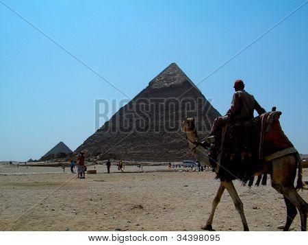 piramids camel