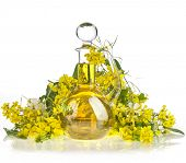 Bottle Decanter oil with Flower of a Rapeseed, Rape blossoms isolated  on white background