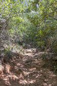 Nature And Forest In Africa. Hiking Trail In The Tablemoutain National Park, Cape Town, South Africa poster