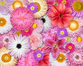 Flower Background Pink, Red, White Colors