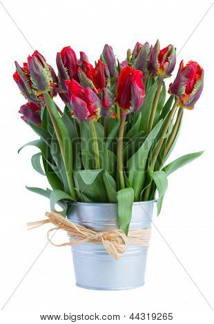 spring tulip flowers in pot