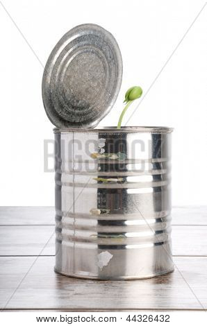 Studio shot of isolated crushed tin can with plant inside on white background