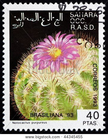Postage Stamp Sahara 1993 Notocactus Purpureus, Cactus