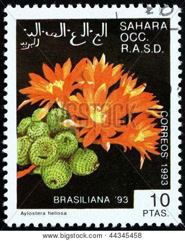 Postage Stamp Sahara 1993 Aylostera Heliosa, Cactus