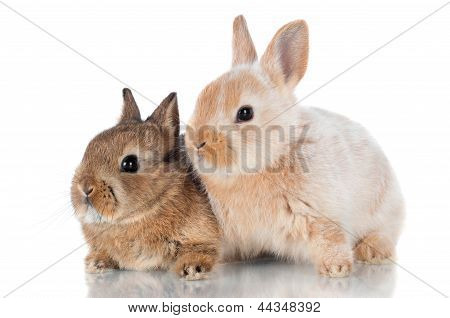two baby rabbits together