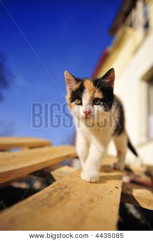 Cute Baby Cat And Blue Sky