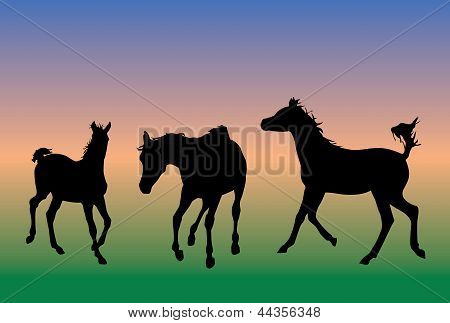 Horses running illustration