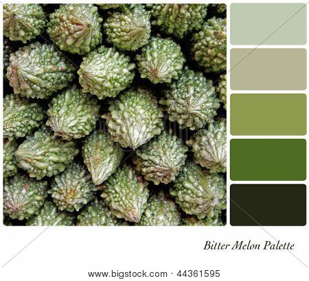 A background of bitter melons, otherwise known as bitter gourds, in a colour palette with complimentary colour swatches.