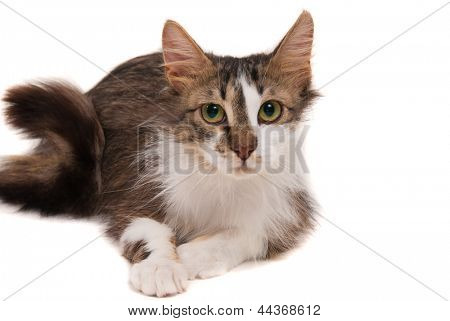 Cat on studio white background