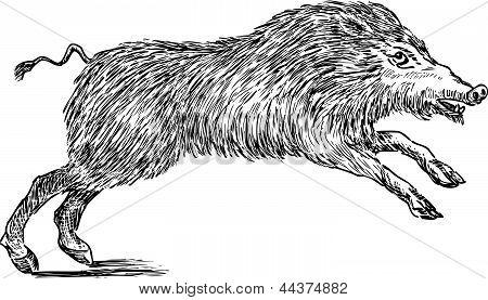 Wild Boar.eps