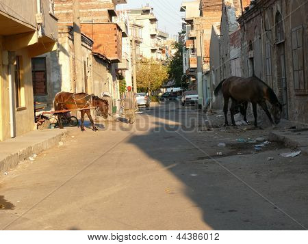Gypsy horses are feeding on streets