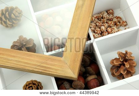 Assortment of nuts,chestnut, pinecone and acorn in white wooden box
