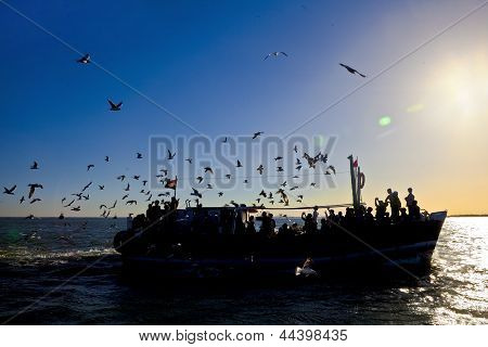 Silhouette Of Seagulls And Passenger Ferry