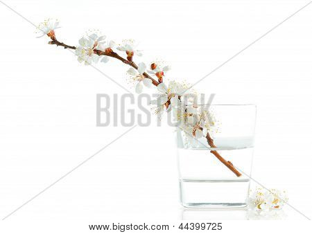 Apricot-tree flowers