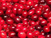 foto of boiling water  - Cranberries boiling in water to make cranberry sauce - JPG