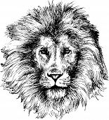 Lion head hand drawn