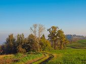 image of bute  - Landscape panorama view of Piedmont hills in Northern Italy - JPG