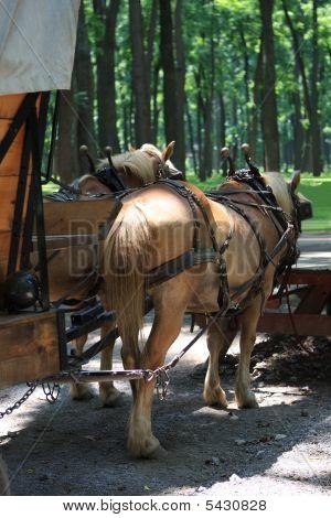 2 Cavalos