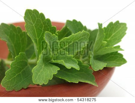 Stevia On A Brown Bowl