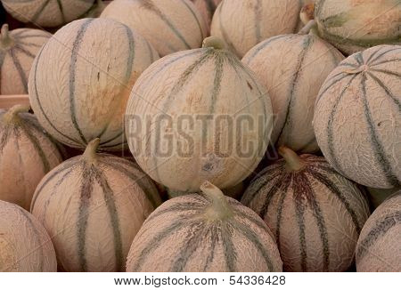 A group of freshly picked cantalopes