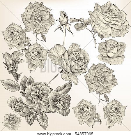 Collection Of Vector Detailed Roses Flowers