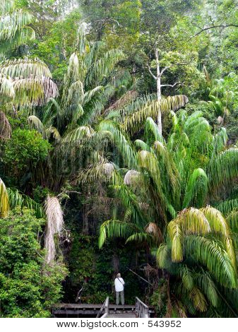 Tourist In Protected Borneo Jungle