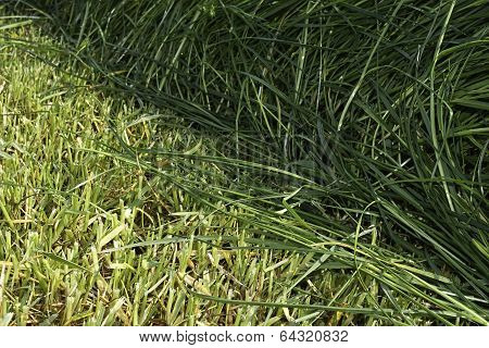 Cutting edge from cut and uncut grass in meadow