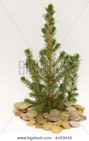 Tree in coins