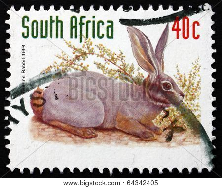 Postage Stamp South Africa 1998 Riverine Rabbit