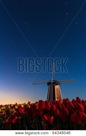 Windmill And Tulips With The Night Sky