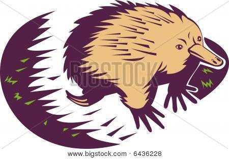 spiny anteater or echidna
