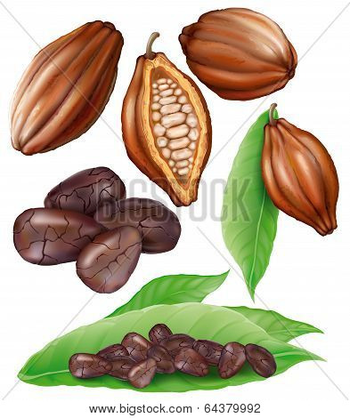 Cacao Pods And Grains