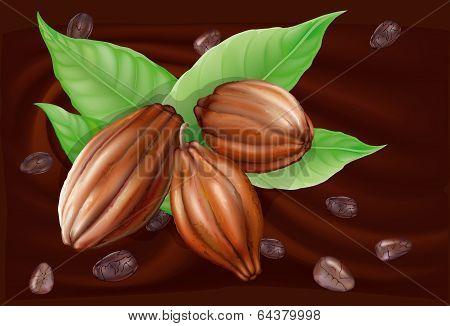 Cocoa Fruit On A Chocolate Background