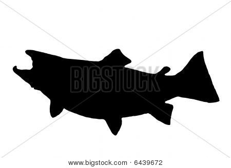 Brown Trout Silhouette