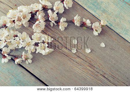 Beautyful Blossom Branch