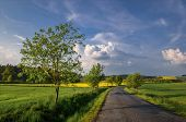 stock photo of linden-tree  - rural road lined with linden trees on a spring day - JPG