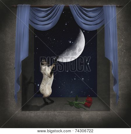Cat Playing With The Moon