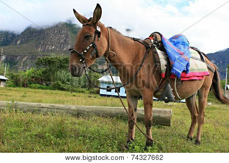 Donkey With Saddle