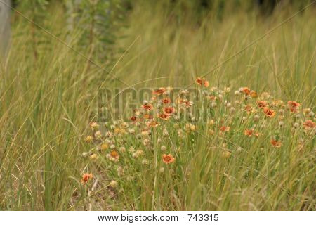 Wildflowers And Tall Grass