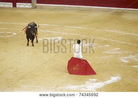 Bullfigting in Misericordia bullring, Zaragoza, Spain.