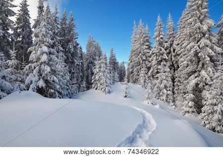Winter landscape. The trail in the snow. Mountain forest. Carpathians, Ukraine, Europe