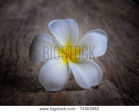 Frangipani On Wood