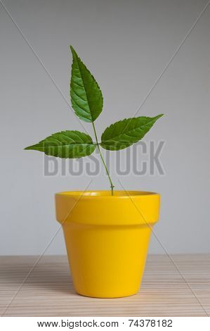 Young Plant In  Clay Pot.