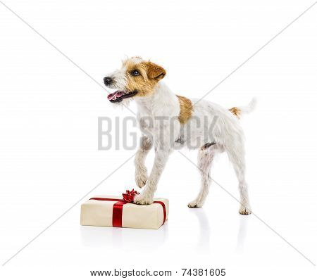 Dog standing on Chrismas gift isolated