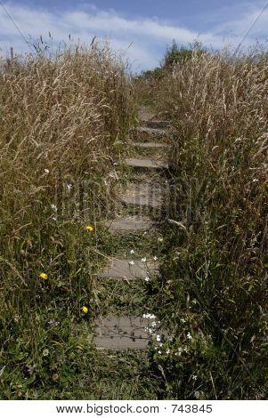 Stairway through Coastal Grasses