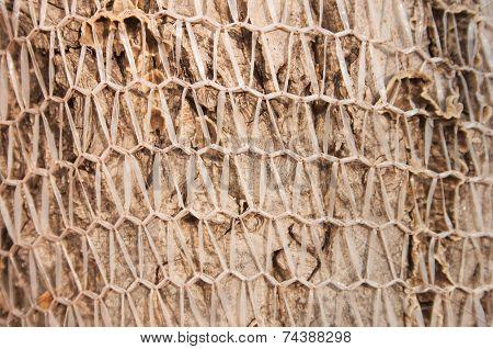 Walnut Tree Bark Covered With Net