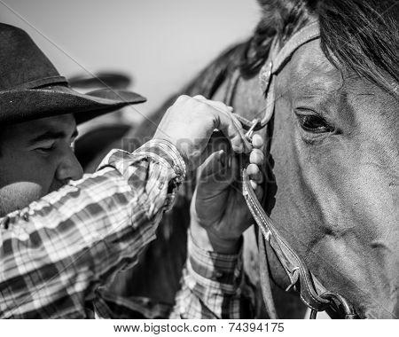 Cowboy adjusting bridle