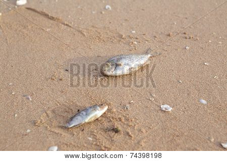 Carcasses Of Dead Fish