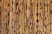 stock photo of bamboo  - Brown bamboo background - JPG